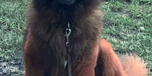 bandi Animal life